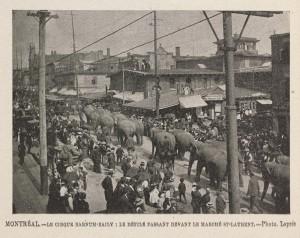 Parade d'éléphants du cirque Barnum & Bailey sur la rue Saint-Laurent
